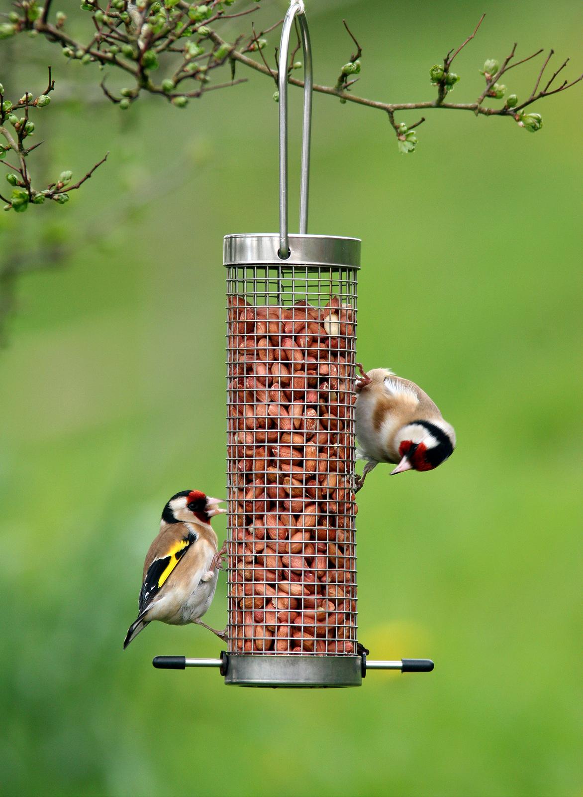how to talk to wild birds